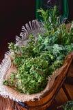 Kruideninzameling van: thyme, orego, rozemarijn Royalty-vrije Stock Foto's
