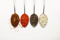 Kruidig Kruiden Thaise kruiden op lepel Peper en caryenne peppe Royalty-vrije Stock Afbeeldingen