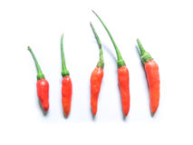 Kruidige rode Thaise geïsoleerde Spaanse peper Royalty-vrije Stock Foto