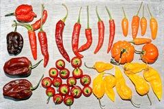 Kruidige Spaanse pepers Royalty-vrije Stock Afbeelding