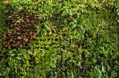 kruidmuur, installatiemuur, natuurlijke groene behang en achtergrond royalty-vrije stock foto's