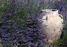 Kruik in het midden van Lavendel Royalty-vrije Stock Fotografie