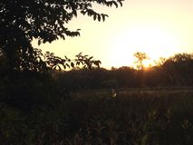Kruipen omhoog op zonsopgang Royalty-vrije Stock Fotografie
