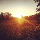 Kruipen omhoog op zonsopgang Royalty-vrije Stock Afbeeldingen