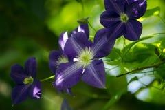 Kruipende blauwe bloemen op een boom Royalty-vrije Stock Afbeeldingen