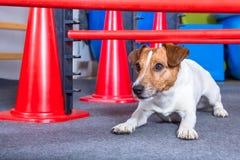 Kruipende hond Stock Foto's