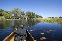 Kruisend de delta door een Mokoro-boot te gebruiken stock afbeeldingen