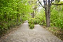 Kruising van twee stegen in het park onder bomen en struiken De grote steeg heeft splitted in twee kleinere wegen ??n steeg gaat  royalty-vrije stock fotografie