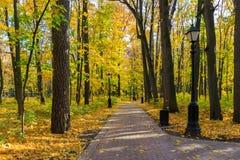 Kruising van twee stegen in het park onder bomen met gekleurde bladeren bij zonnige de herfstdag stock foto's