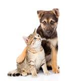Kruisingshond die kleine gestreepte katkat omhelzen Geïsoleerd op wit Stock Afbeelding