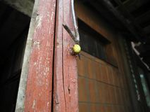 Kruisspin met een gele buikzitting op de deurclose-up stock afbeeldingen