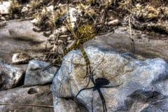 Kruisspin op een Web Stock Foto's