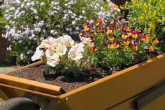 Kruiwagen met bloemen royalty-vrije stock foto