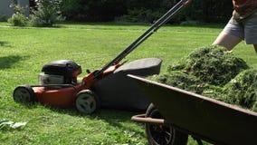 Kruiwagen met gesneden gras en tuinmanvrouwen maaiend gazon met maaimachine 4K stock video