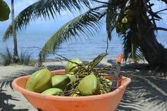 Kruiwagenhoogtepunt van kokosnoten Royalty-vrije Stock Fotografie