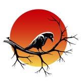 Kruk na gałąź Obraz Royalty Free