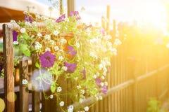 kruka av blommor Arkivfoto