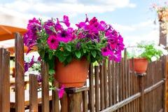 kruka av blommor Fotografering för Bildbyråer