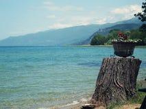 Kruka av blommor på kusten av sjön Ohrid Arkivbilder
