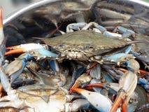 kruka för 2 blå krabbor Royaltyfria Foton