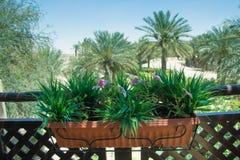 Kruka för insida för konstgjorda blommor stor brun plast- på balkongen med sikt på palmträd Arkivbild