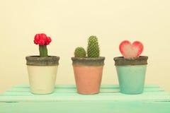 Kruka för lera tre med kaktuns och trähjärta royaltyfri foto