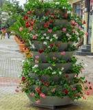 Kruka med blommor Arkivfoto