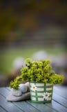 Kruka med gräsplan plant.GN Royaltyfri Fotografi