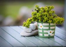 Kruka med gräsplan plant.GN Arkivbild