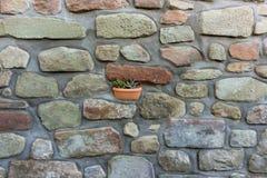 Kruka med växten Royaltyfria Foton