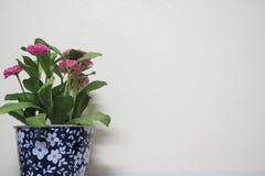 Kruka med vit väggbakgrund för blommor royaltyfri fotografi