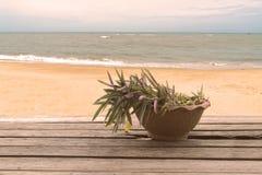 Krukväxt som är beachfront på trätabellen Royaltyfria Foton