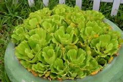 Krukväxter Royaltyfri Fotografi