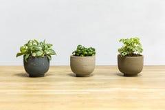 Krukväxter på trätabellen Royaltyfri Fotografi