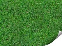 Krul van gras stock foto