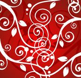 krullar white Royaltyfria Bilder