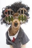 Krullende Haired Bedrijfshond Stock Fotografie