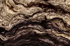 Krullende houten textuur Royalty-vrije Stock Afbeelding