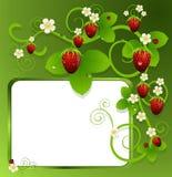 Krullning med jordgubbar och blommor Royaltyfri Illustrationer