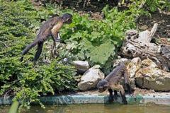 Krummer Tour im Zoo Lizenzfreie Stockbilder