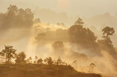 Krungshing fog view point/ sea of fog. At Noppitam, Nakhon Si Thammarat, Thailand Royalty Free Stock Photography
