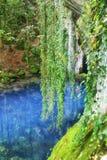 Krupajsko water source Stock Photography