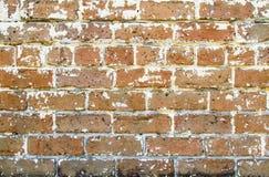 Krupiasty ściana z cegieł Obrazy Stock