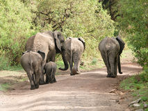 kruponu słoń Fotografia Stock