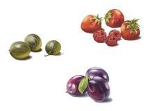 Krusbär, jordgubbar och plommoner Royaltyfria Bilder