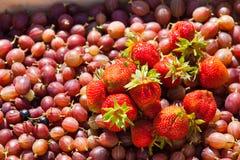 Krusbär och jordgubbar i korg Arkivfoto