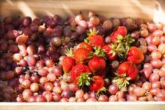 Krusbär och jordgubbar i korg Arkivbilder
