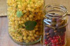 Krusbär och vinbär i retro krus till förberedelsen Royaltyfri Fotografi