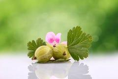 Krusbärfrukt Royaltyfri Bild