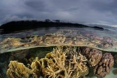 Krusi korale i Chmurny niebo w Raja Ampat Obraz Stock